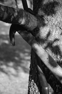 hammer in tree